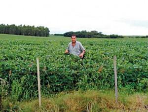 Campo3 300x227 Crece Interés Local por Campos Uruguayos