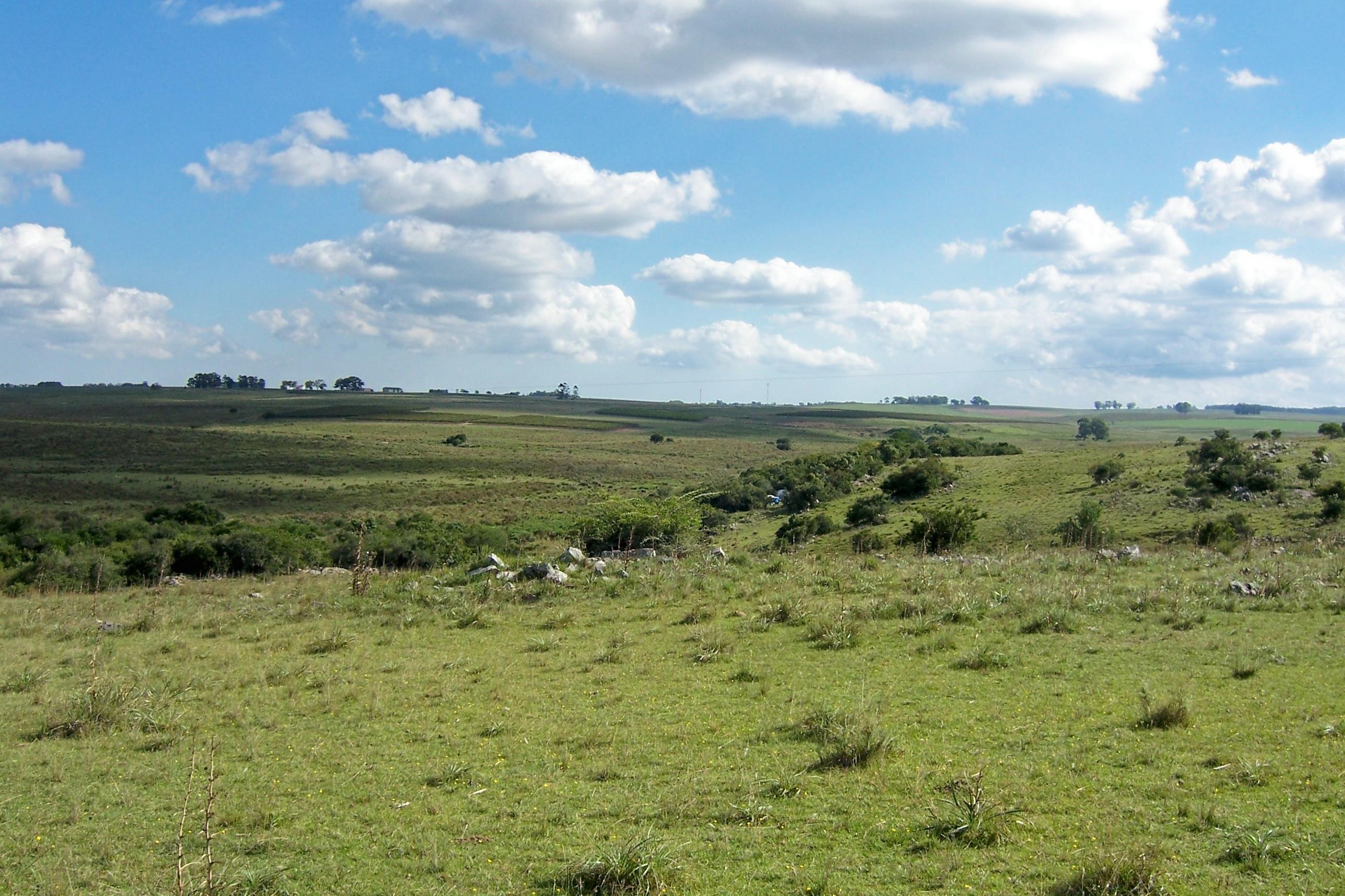 Pradera_y_bosque_de_ribera_Uruguay