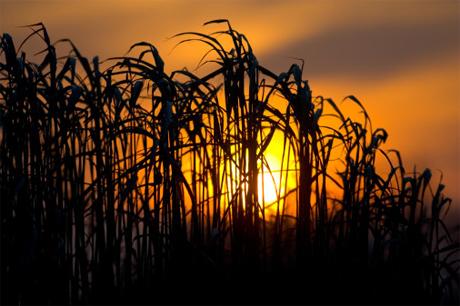 Agricultura en Uruguay