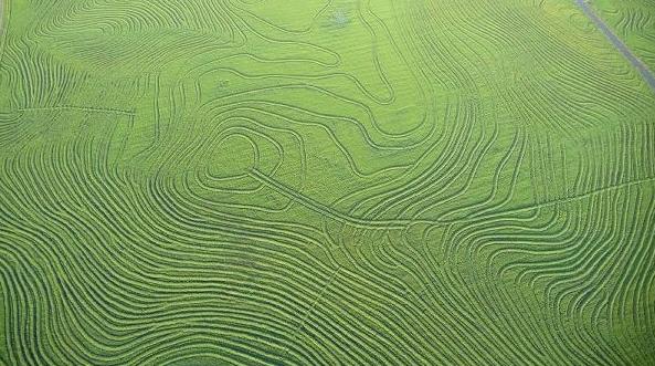 nacho guani campos arroceros en uruguay Imagenes del Uruguay Tomadas por el Fotógrafo Nacho Guani