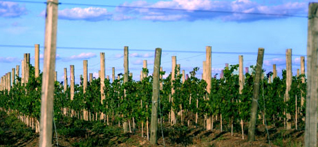 fincapiedra viñedos Turismo Rural en Uruguay: Tres Opciones Para Este Otoño
