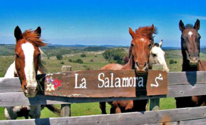salamora caballos 300x183 Turismo Rural en Uruguay: Tres Opciones Para Este Otoño