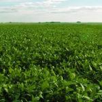 campo soja uruguay 150x150 La Evolución del Valor de la Tierra en Uruguay