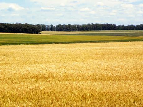 Tierra en Uruguay