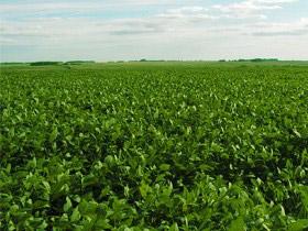 campo soja uruguay Precio de la tierra creció 12% en 2014 pero agentes auguran baja