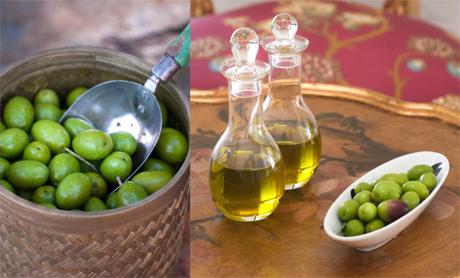 Producción de Aceite de Oliva Extra Virgen en Uruguay