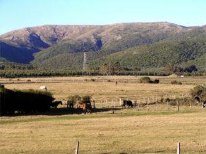 campos en uruguay 300x225 6 Elementos Básicos para Evaluar un Campo en Uruguay