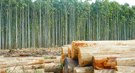forestal 2460x250 Informe del Sector Forestal en Uruguay